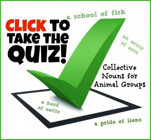 Animal Group Name Quiz
